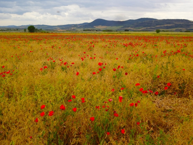 Wheat and poppies on the way to Puente la Reina
