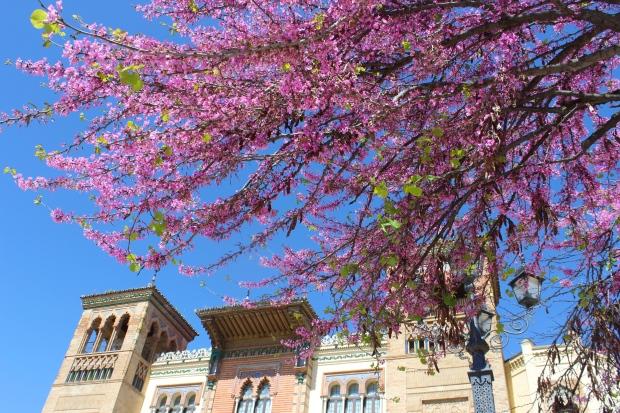 Springtime in Sevilla