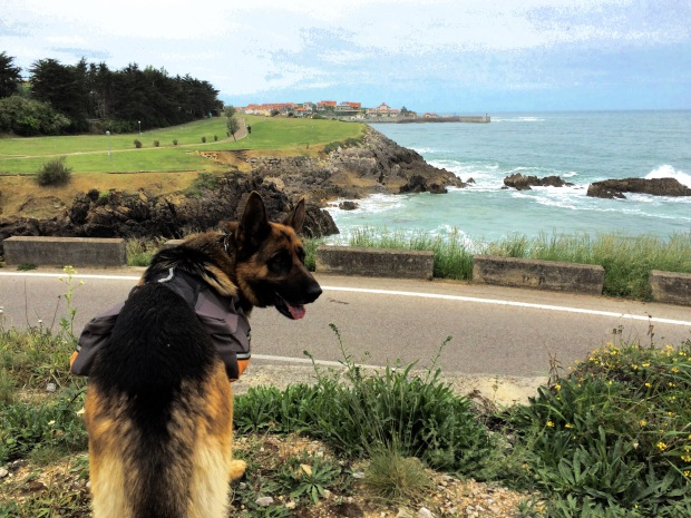 One of the perros looking towards Comillas